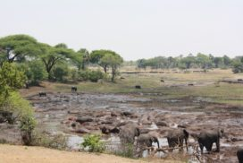 Elephant Hippo bay in Katavi