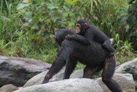 Monkeys Clutch Adventures
