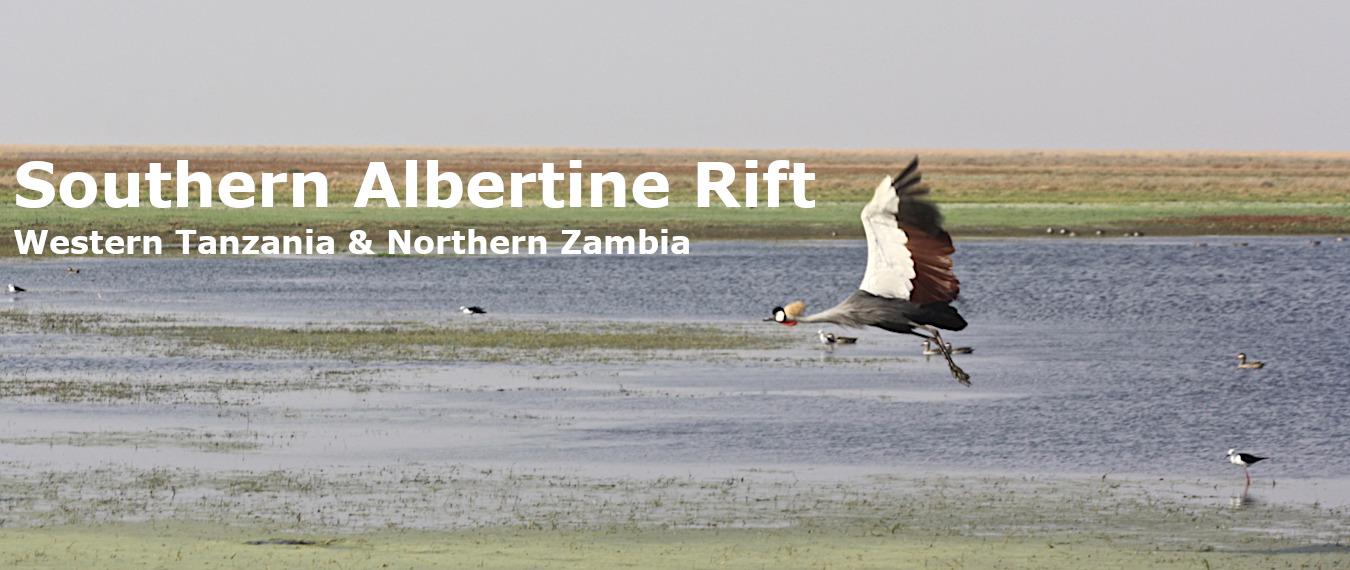 southern albertine crane